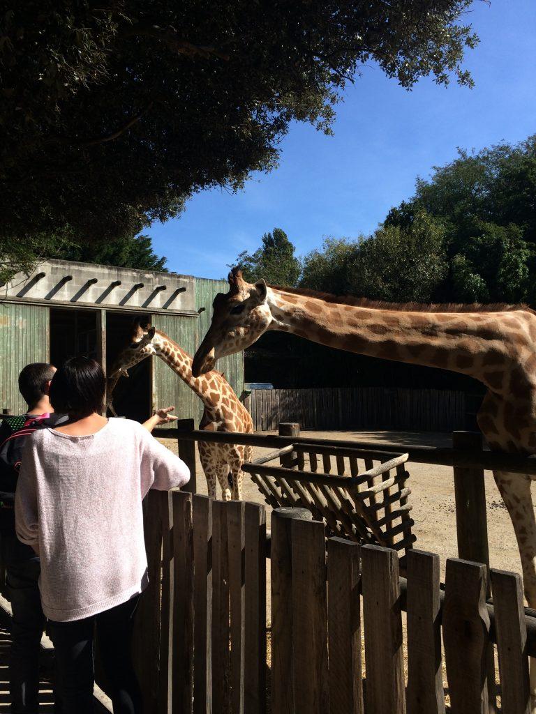 Sortie Familles : Nos amies les bêtes